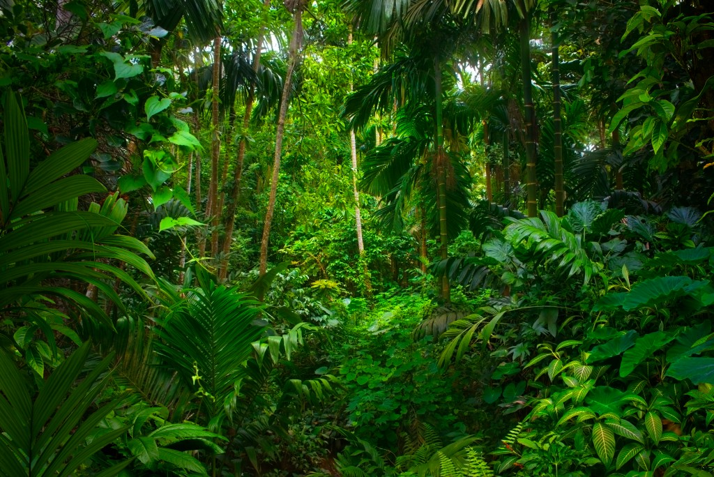 Out in the wilderness. Rainforest